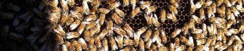 le api e il loro miele nella nostra cascina
