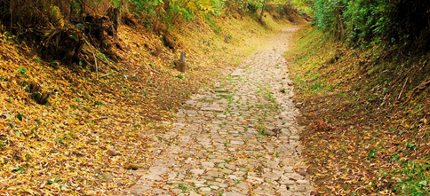 Un tratto della Via Francigena
